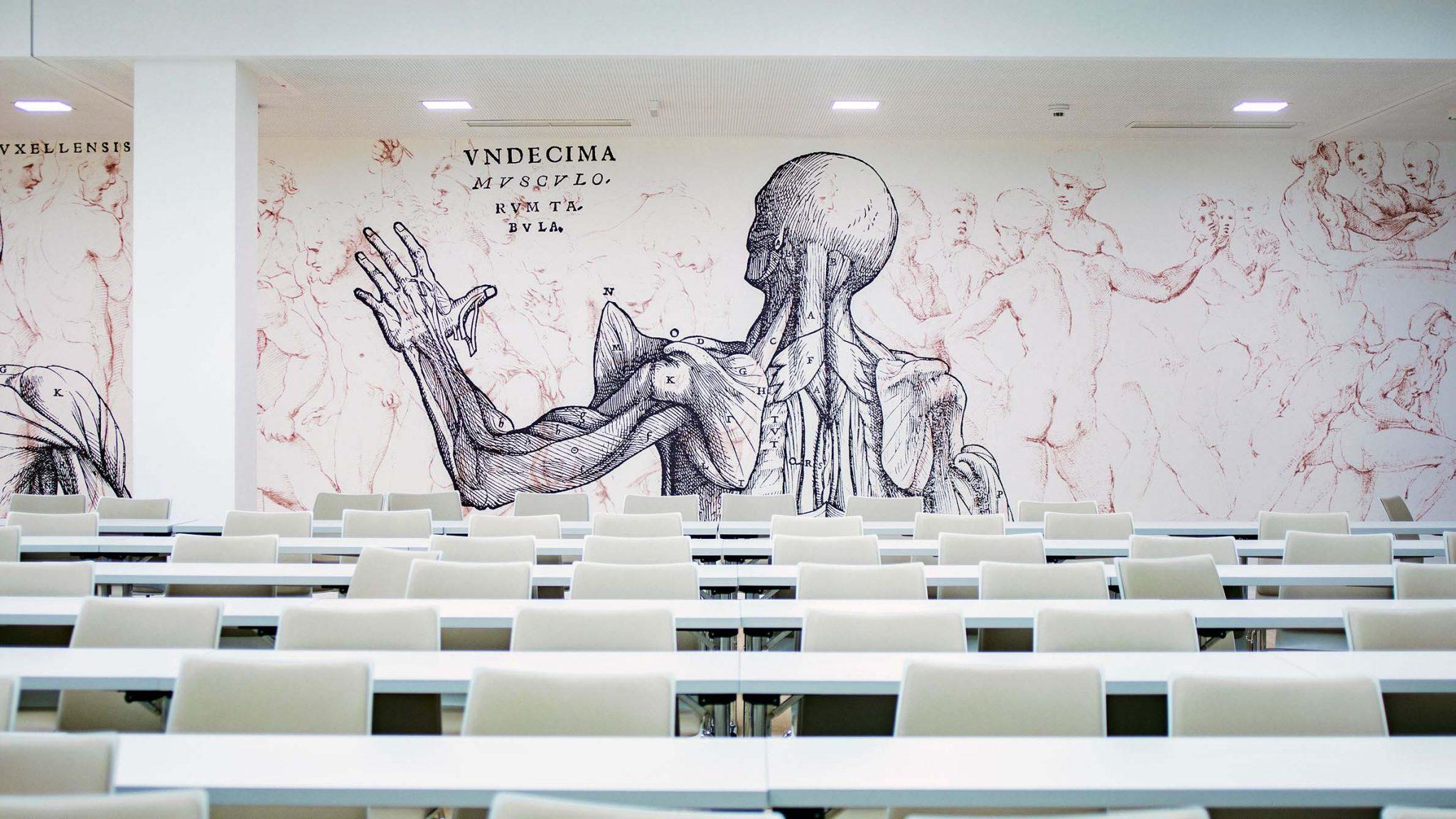 Nahaufnahme der Tapete im großen Hörsaal mit anatomischer Darstellung des Rückens und Kennzeichnung der Muskel.